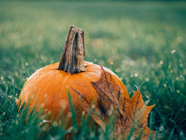 autumn-decoration-fall-511448